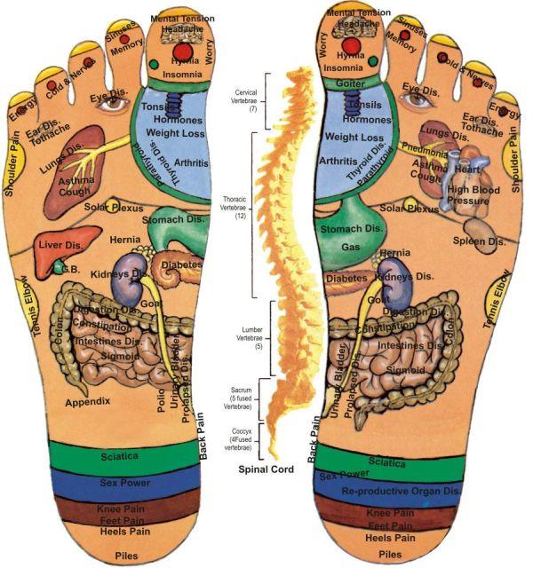 Đôi bàn chân thể hiện toàn bộ nội tạng trong cơ thể