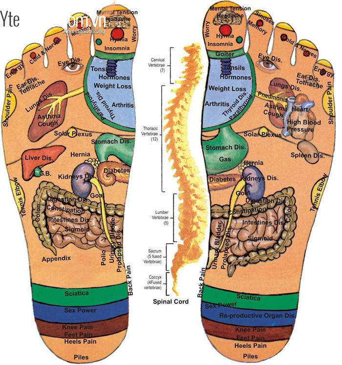 Bồn ngâm chân gioonp phòng và chữa nhiều loại bệnh