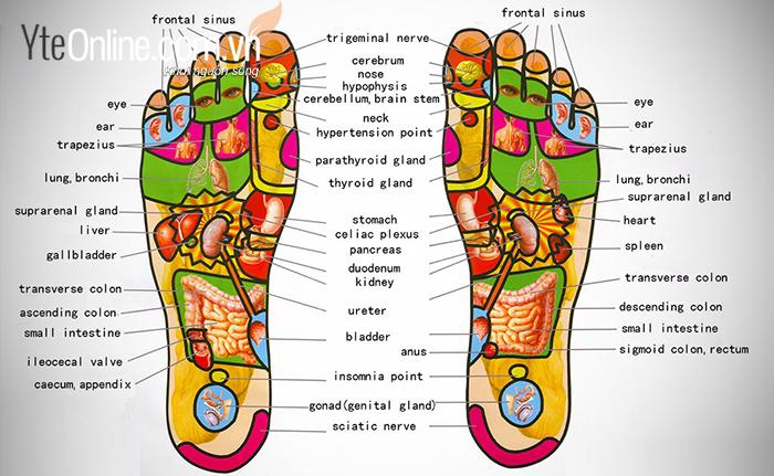 Tìm hiểu một số huyệt vùng chân