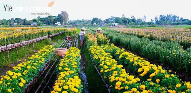 Bí quyết giảm đau chân dành cho nhân viên bán hoa, cây cảnh ngày cận tết